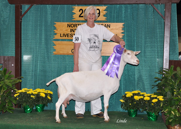 2009 NAILE Best Udder in Show and Grand Champion
